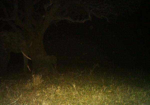 Bedtime elephants. Small one too!