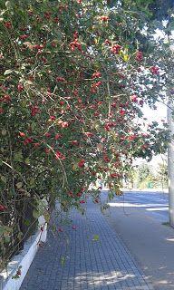 Winogrady: Ulica Winogrady w październiku.