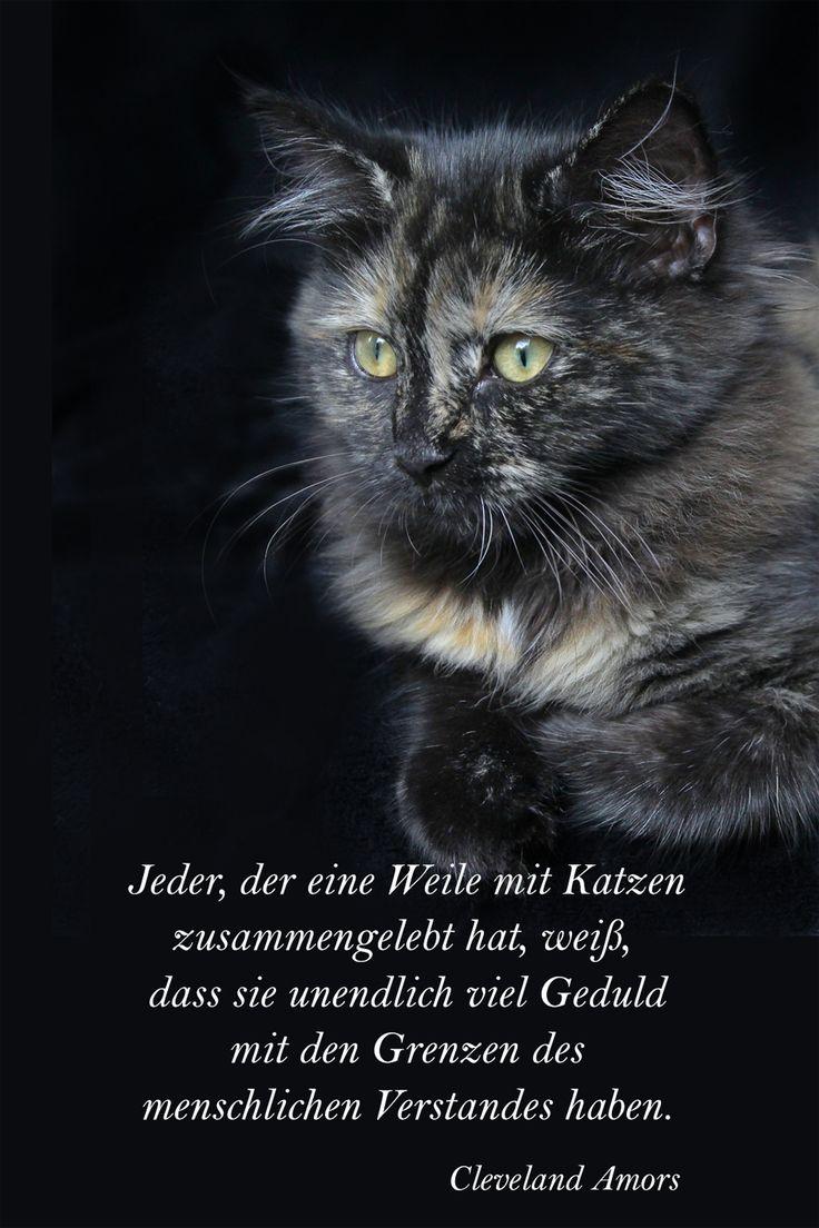 72 best Katzen-Poesie images on Pinterest | Baby cats, Baby kittens ...