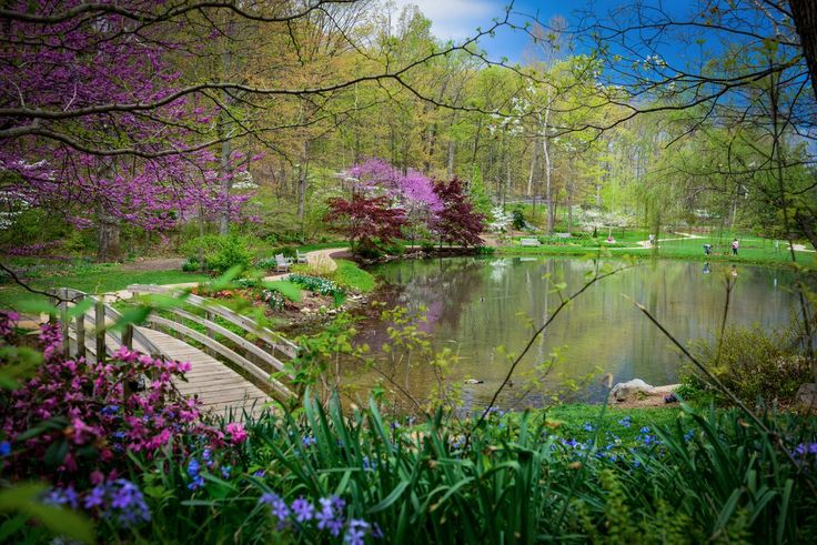 Confession here... when the dark, cold, dreary season of winter sets in, I dream of springtime at the EJC Arboretum. Picture from JMU@JMU, Twitter