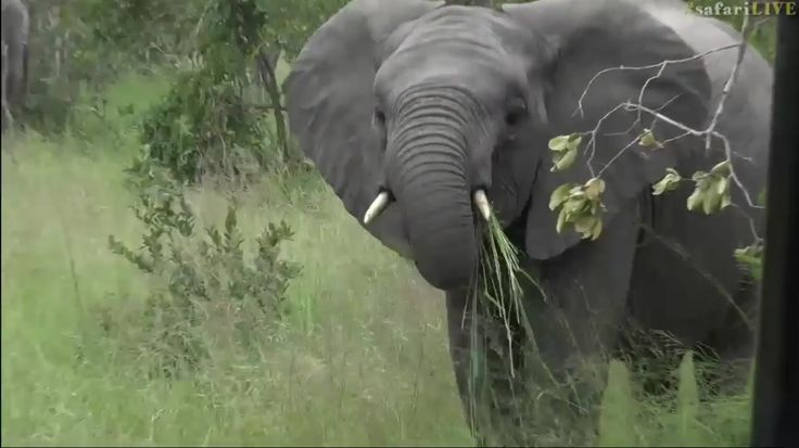 safariLIVE Ellis screenshot March 2017