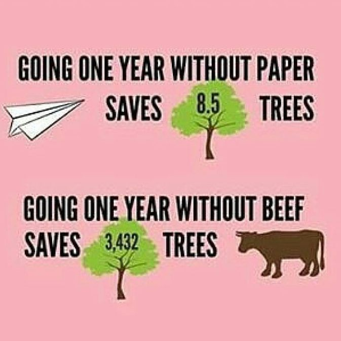 Quotes About People Who Notice: 25+ Best Ideas About Deforestation Facts On Pinterest
