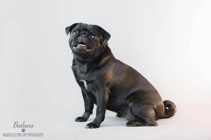 Barbara - Pug