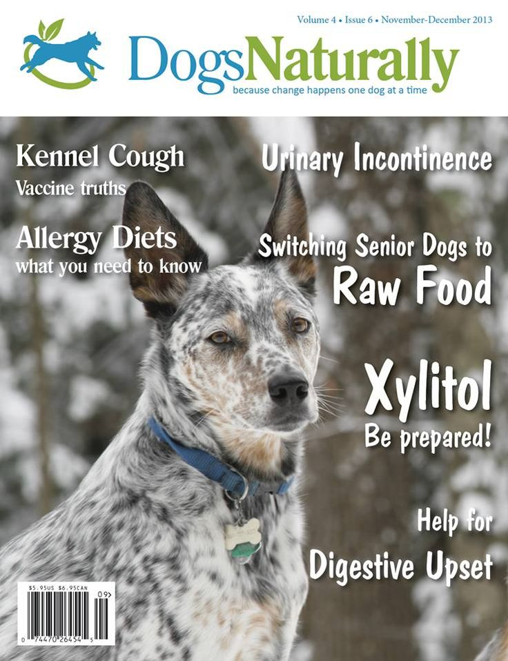 We Re Getting Ready To Make The Next Issue Of Dnm But If You Don T Subscribe You Ll Miss Out S Dogs Naturally Magazine Holistic Pet Care Natural Dog Health