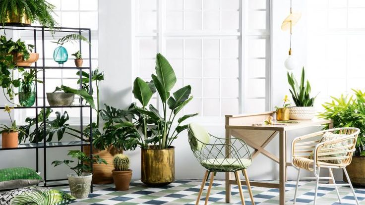 """Bringing indoor plants into your home will create a nurturing and stylish environment and you don't have to have a green thumb to help them thrive."""