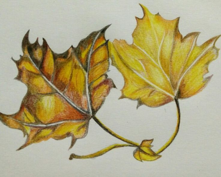 AutumnLeaves#PencilColors