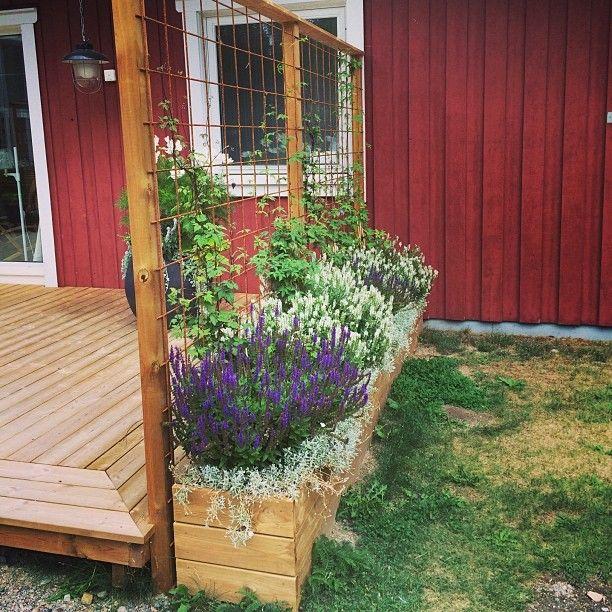 Tips på supersnyggt insynsskydd till altanen! Tryckt virke, tre brädor hög låda och tre stolpar med överliggare och armeringsnät. Fint med tex stäppsalvia i två färger och en klätterväxt Sätt många små hjul under så kan du flytta runt det. Inspiration hämtad från Växbo Lins fina altan!#tips #inspiration #snickra #trädgård #inspirationträdgård #insynsskydd #insynsskyddträdgård #altan #armeringsnät #stäppsalvia #växbolin