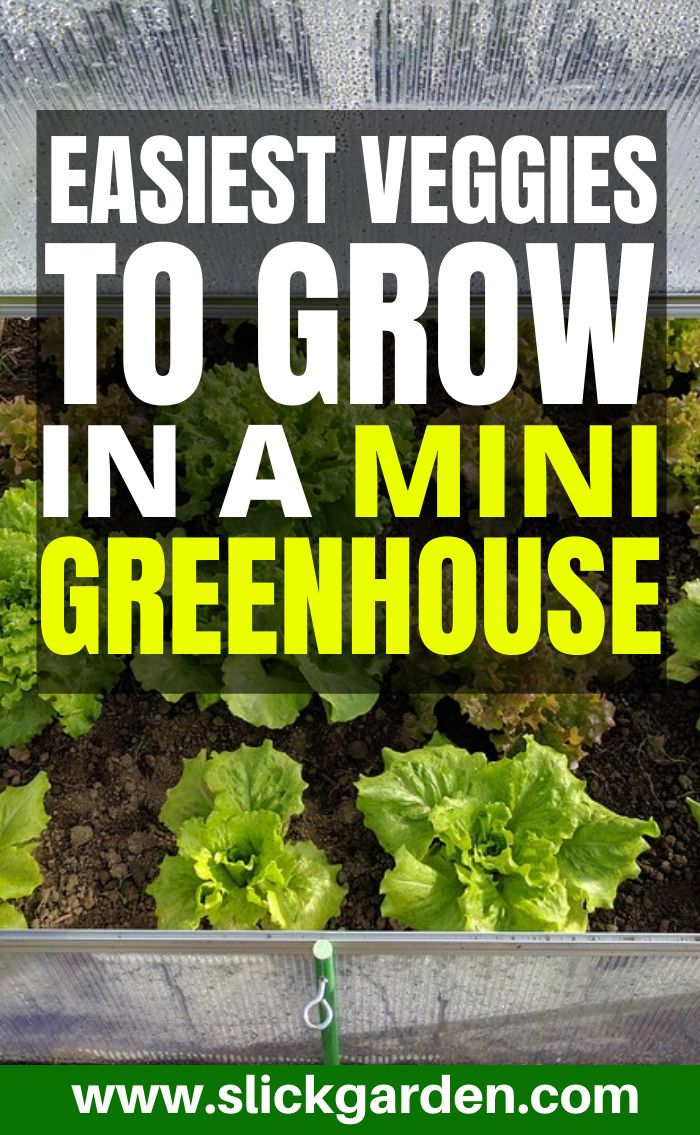 12 Easiest Veggies To Grow In A Mini Or Small Greenhouse 400 x 300