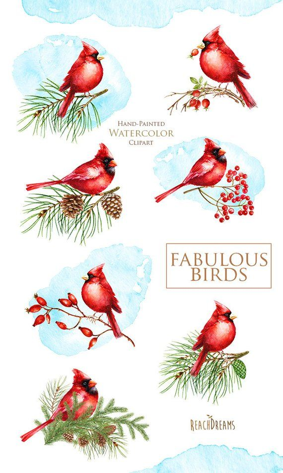 Watercolor Birds Holiday Clipart Red Cardinal Merry Christmas