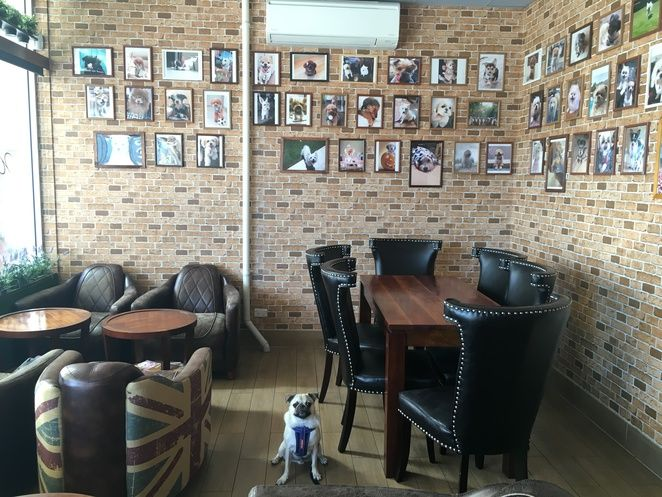 The closest you're going to get to a dog cafe in Brisbane, Woofissimo Cafe and Restaurant - MacGregor