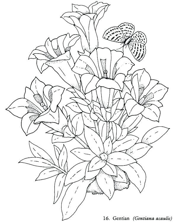 Garden Flowers Coloring Pages Daisy