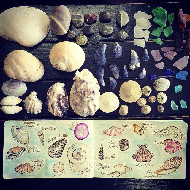 Found things. #sea #shells #sketch #sketchbook #pugetsound #summer #beach #drawing #drawingnature #naturejournal #theydrawandtravel