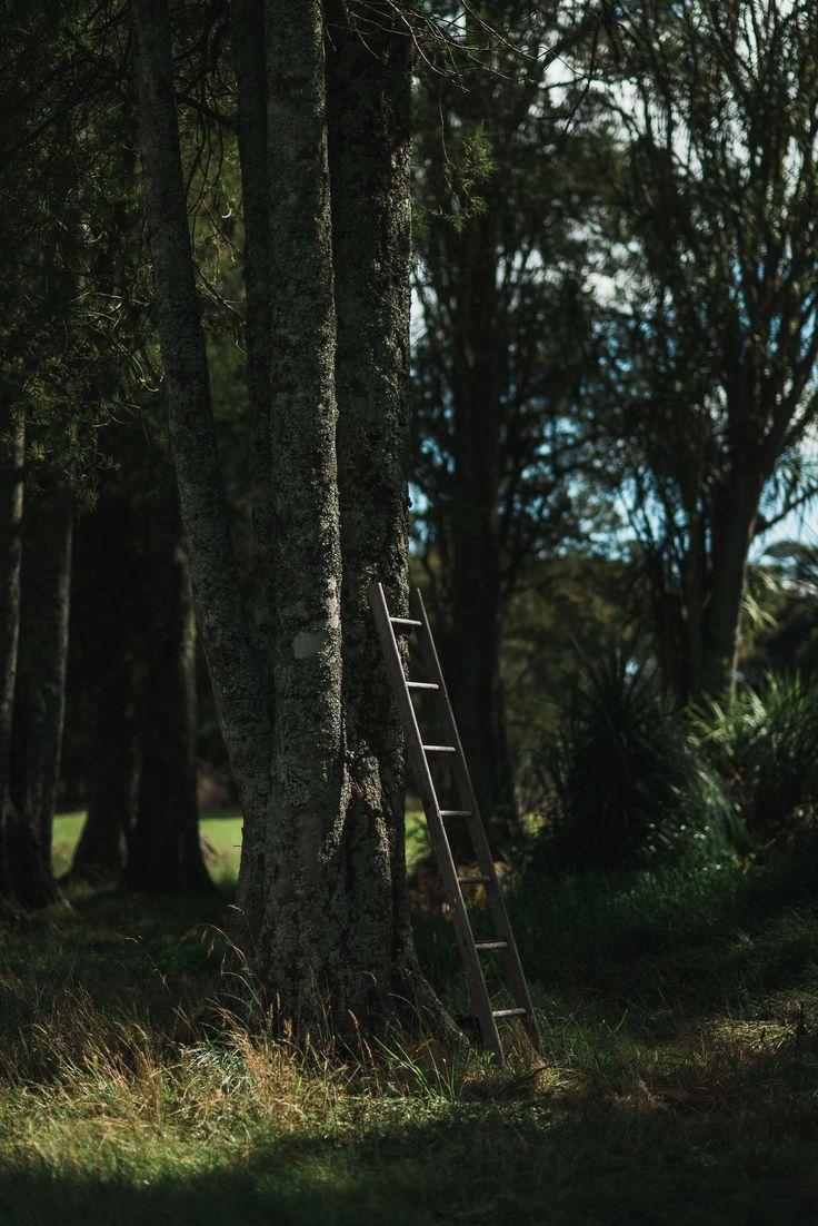 Little Kahikatea Forest