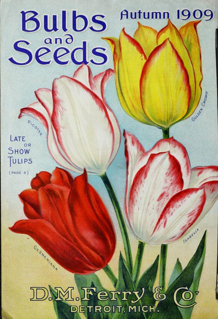 D.M. Ferry & Co. -  Bulbs & seeds : autumn 1909