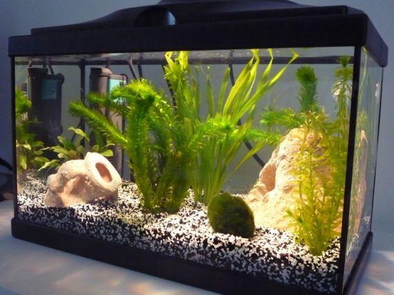aquarium 20l black and white