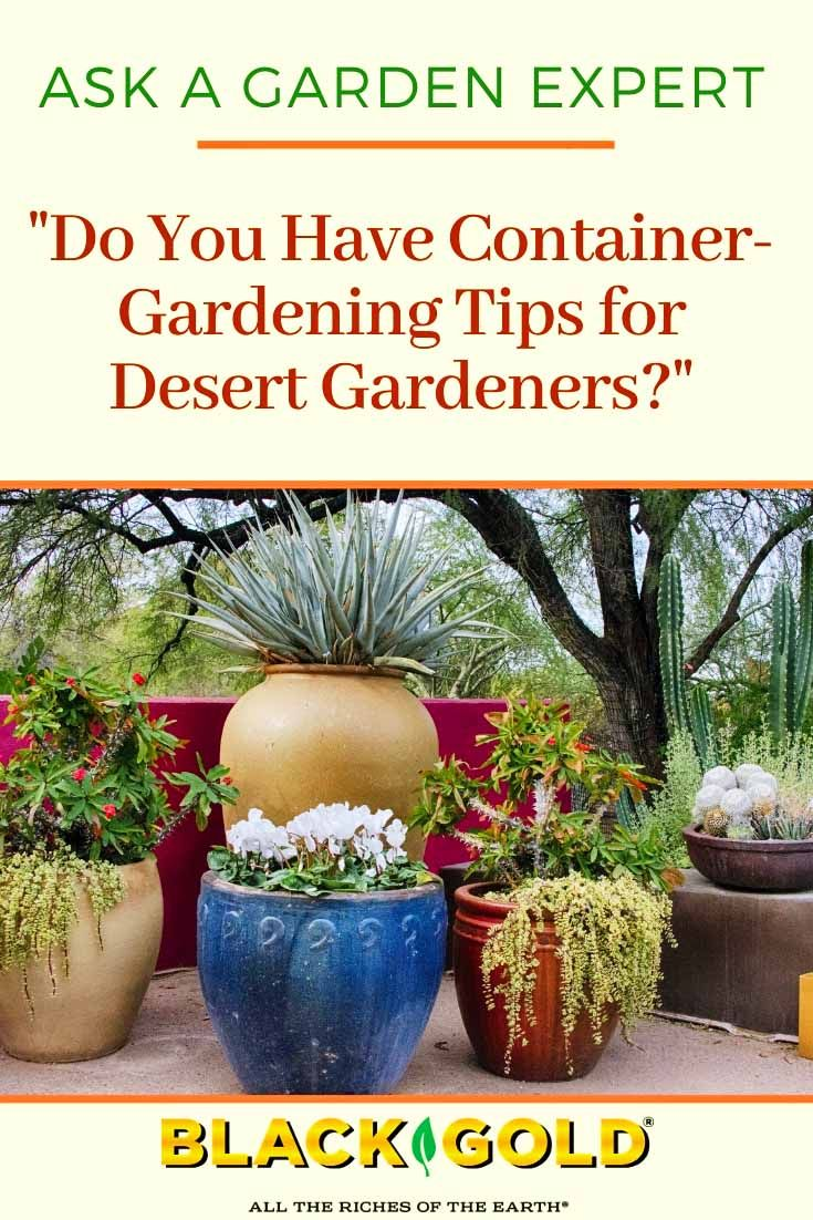 51ff302745706ec5e560b8c59d158d56 - Gardening In Az What To Plant