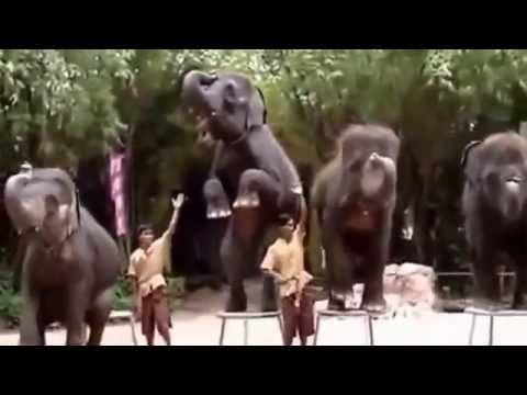 Things Cute Animals Animals | Elephants Play Ball