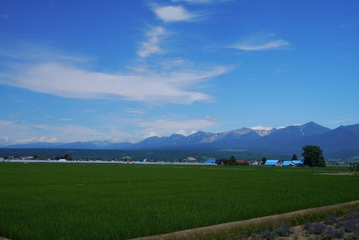 田んぼと大雪山 | by bluegreen405