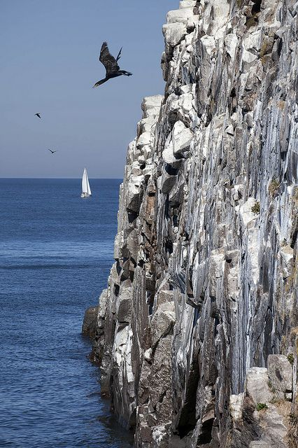 Rock-diving cormorant at Johns Kapel, Bornholm
