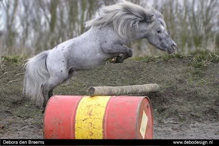 So cute!  Nice jumping form too... :)