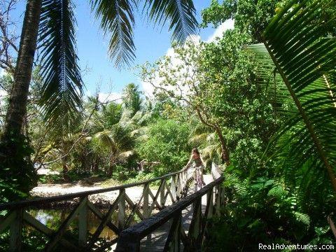 Kosrae ; Micronesia