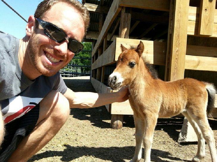 Уберите детей от экранов: 30 мимими мини-лошадей • НОВОСТИ В ФОТОГРАФИЯХ