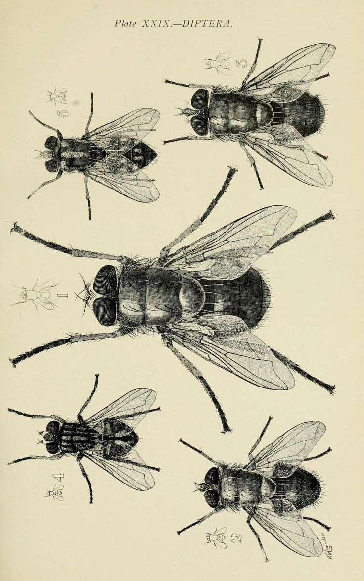 74 best insects images on pinterest drawings of insects and bugs