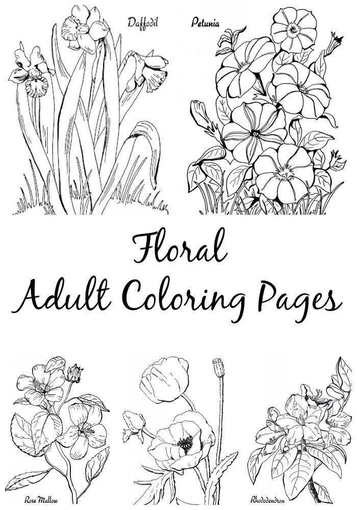 7 Floral Adult Coloring Pages Print Pinterest Coloring Pages