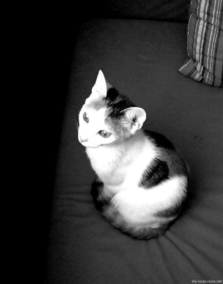 kočička Lili