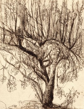 Apricot Study - Kareen Anchen Etching 2011 $140.00 Available at www.cascadeprintroom.com.au