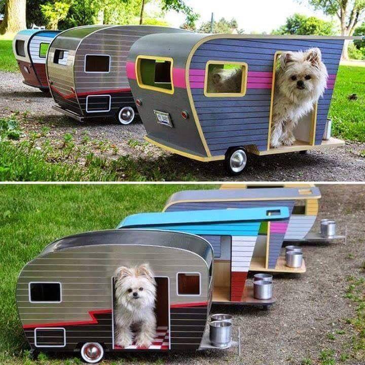 Kul hundkojor!