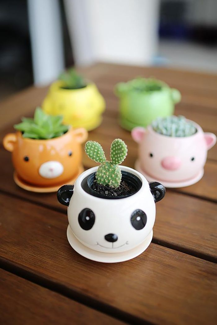 Do you love keeping cactus at home? Well, certainly you need some great DIY cactus planters ideas. Cactus is indeed one of the easiest kinds of plant Mason Jar Succulents, Baby Succulents, Planting Succulents, Planting Flowers, Succulent Arrangements, Succulent Pots, Cute Apartment Decor, Diy Plaster, Decoration Plante