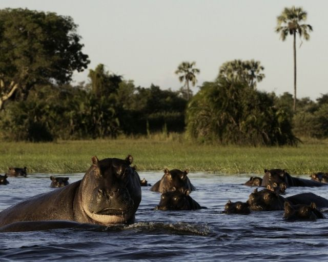 The Okavango Delta is an something that you have to experience at Little Mombo Camp  http://www.africanwelcome.com/botswana/botswana-private-game-lodges/little-mombo-botswana