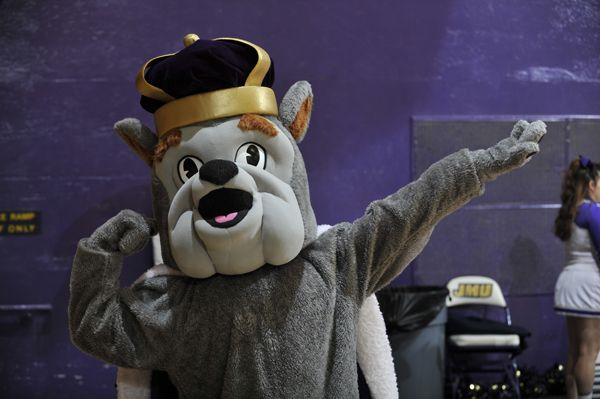 19 best college mascots colonial athletic caa images on for James madison pets
