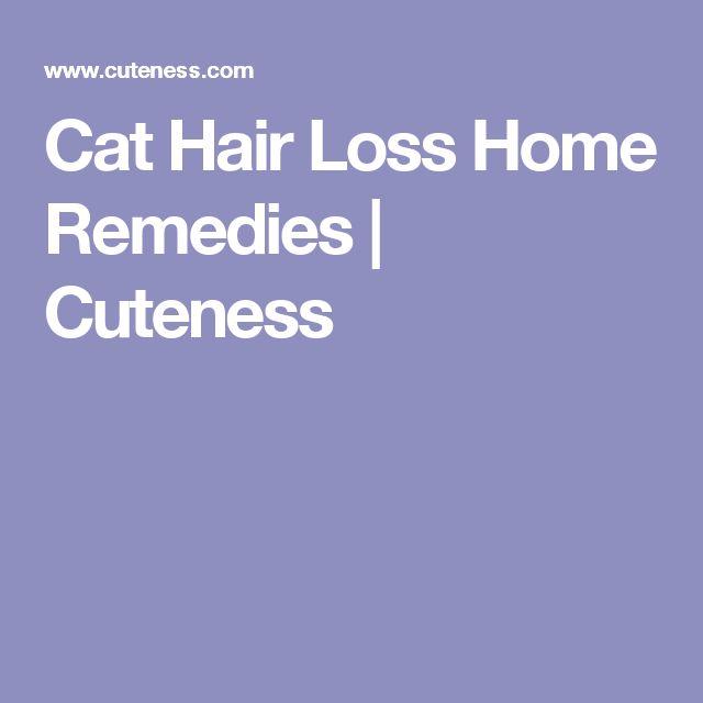 Cat Hair Loss Home Remedies | Cuteness