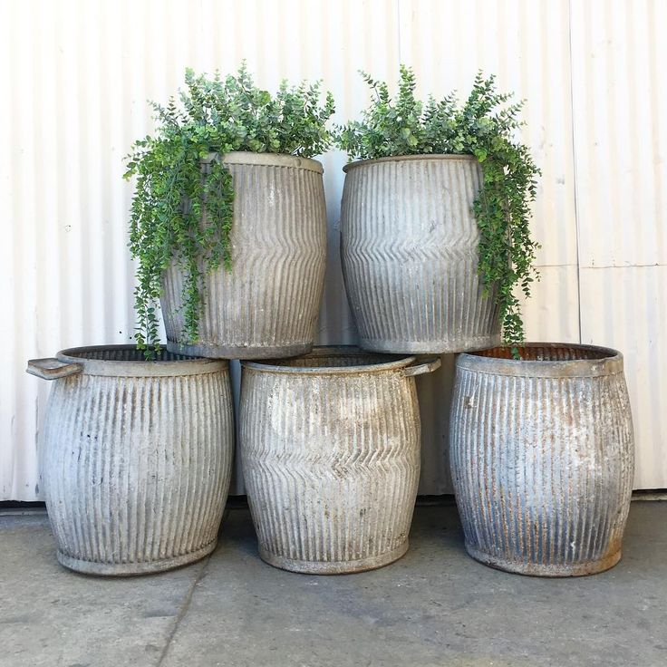 European Dolly Tubs (galvanized wash tubs)are large enough to hold a variety of plants and make a striking statement in the garden.
