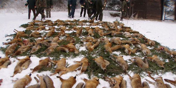 petitie: Russian Investigators: Hold Men Accountable for Killing an Innocent Bear!