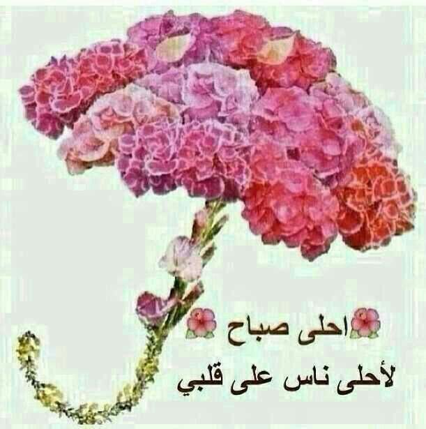 Good Morning In Arabic : Best صباح ومساء images on pinterest