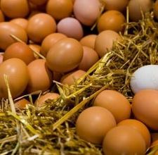 When Chickens molt they lay less eggs, so it's good to have some set aside. You can preserve them up to a year. Here are some links for preserving eggs: http://www.oldandsold.com/articles11/miscellaneous-recipes-13.shtml http://preparednesspro.com/safely-preserving-eggs/