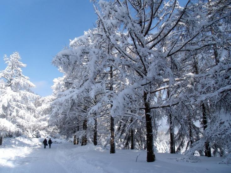 Mi viaje a la vida: Día 197 - ¿Te #gusta la #nieve? - #TeamLife #CaminoHaciaLaVida