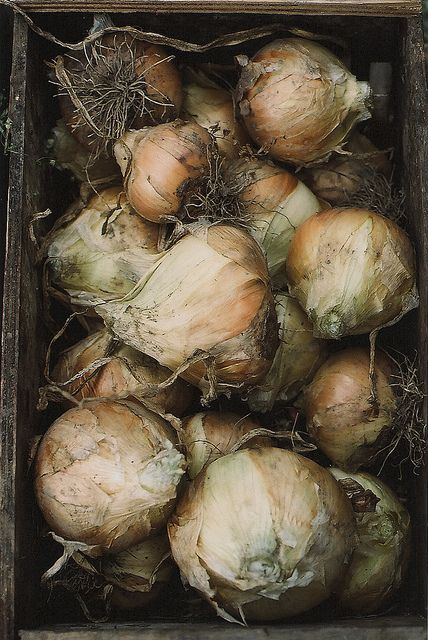 Onions by julie marie craig