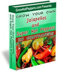 Grow Ghost Pepper Plants