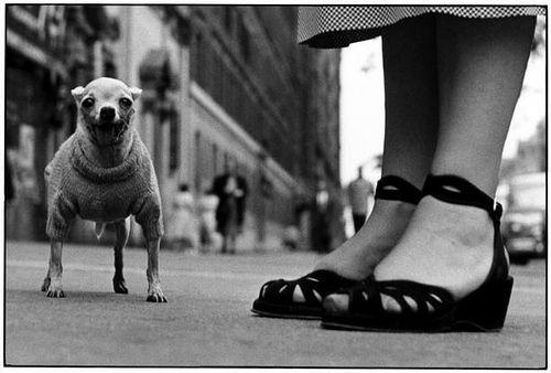 Erwitt, Elliott (1928- ) - 1946 New York City, New York by RasMarley, via Flickr