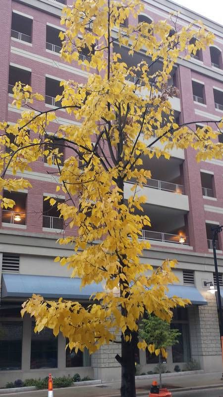 Autumn in downtown GR, MI  http://earth66.com/autumn/autumn-downtown/
