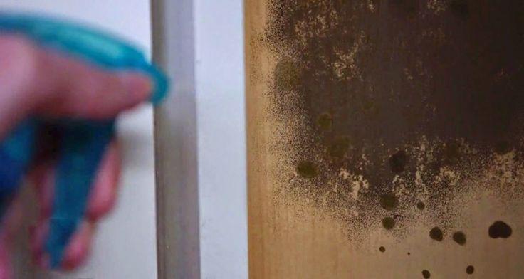 spray-hand-wall
