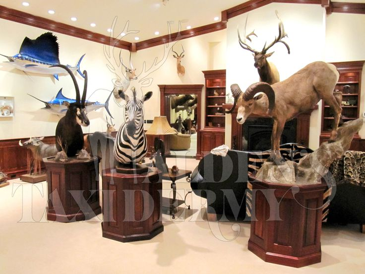 338 Best Huntress Heaven Taxidermy Trophy Hunting Gallery Images