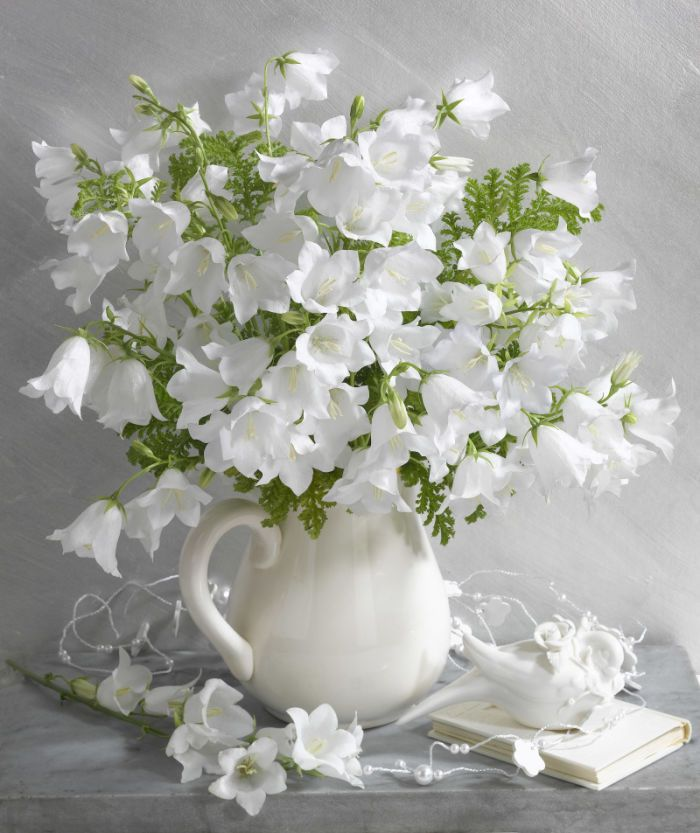White bellflowers