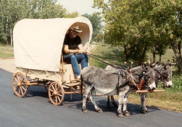 wagon+for+miniature+donkeys | pony rides donkey cart rides ...