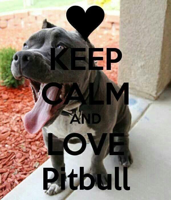 Keep calm and love a pitbull