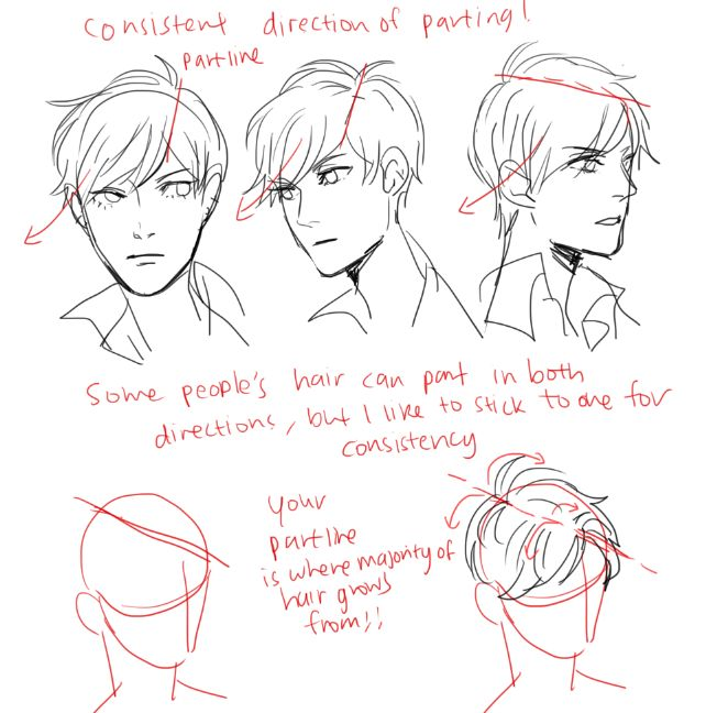 Drawing Hairlines : Best images about anatomy hair on pinterest